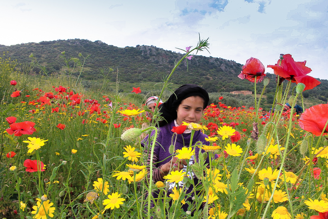 Beni Mellal Poppy Fields